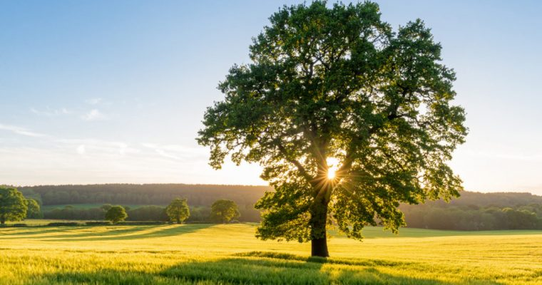 5 Things a Tree is doing for you right now!